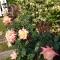桃色の花とデザートと