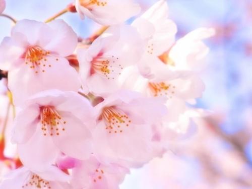 春を愛する人